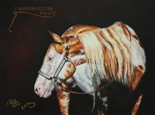 Paint Horse portré