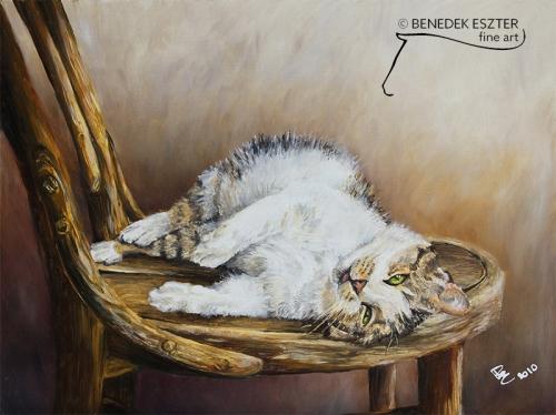 Bazsa cica