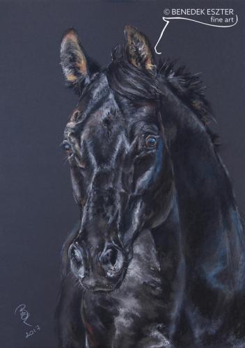 Fekete lóportré